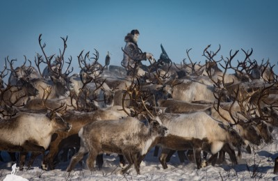 canada north west territories kylik herding caribou