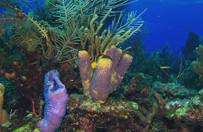 belize scuba coral, photo by marlene lowen