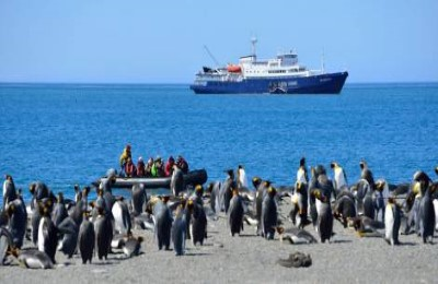 falklands ship penguins2 oceanwide