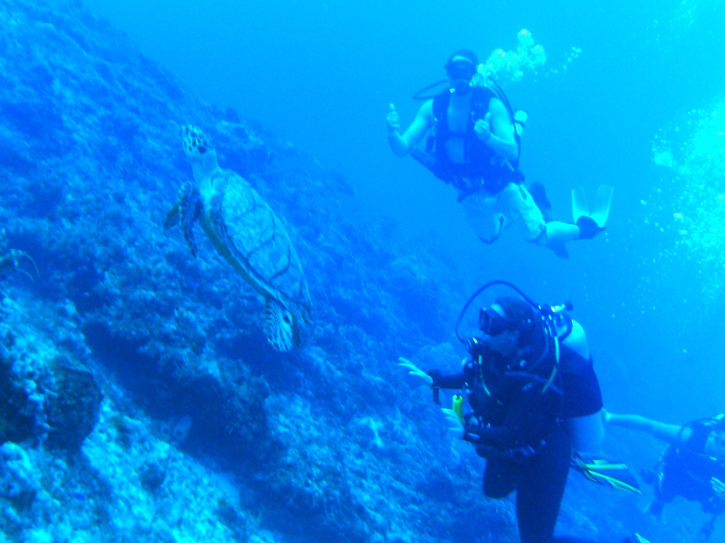 Diving with turtles